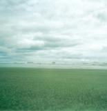 montrose_beach1